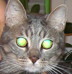 vision du chat dans le noir