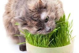 boules de poils chez chat