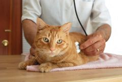 premiers secours chat