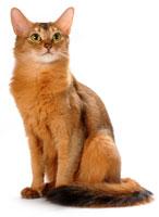 somali chat