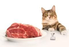 préparer de la viande à son chat