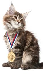 chat médaille