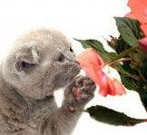litière pour chat parfumée