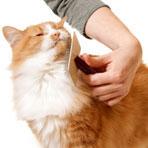 brosse chat