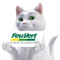 feu vert chat blanc