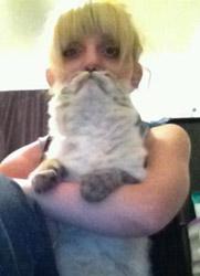 cat beard