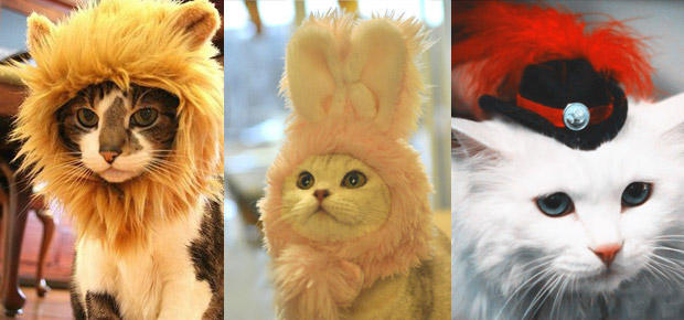 D guisement pour chat d guisement chat sur enperdresonlapin - Deguisement chat fille ...