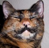 zoe moustache chat